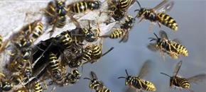 flyvende insekter